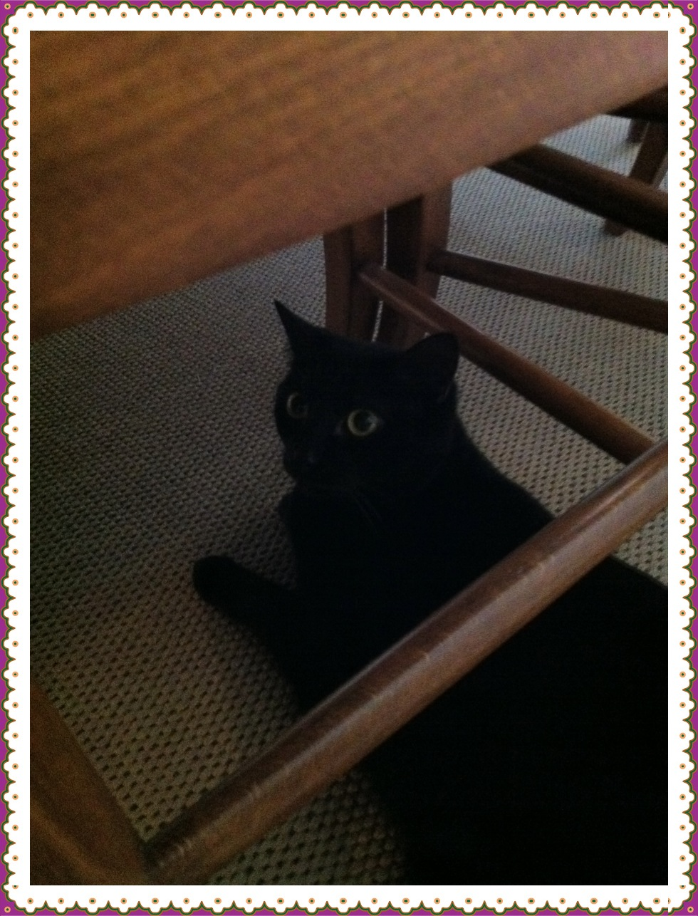 バリのブルジョア宅のくろ猫