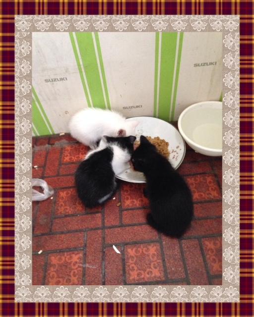 子猫は、元気に食事中