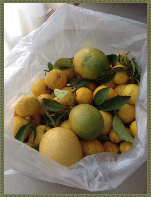 無農薬柚子とレモンが収穫できました